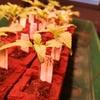 Anesia Seeds Big Bazooka 2 Wochen alt
