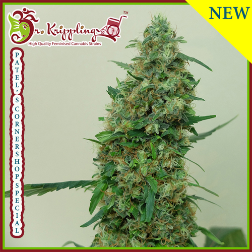 Patels Cornershop Surprise / FEM 5er / Dr Krippling Seeds