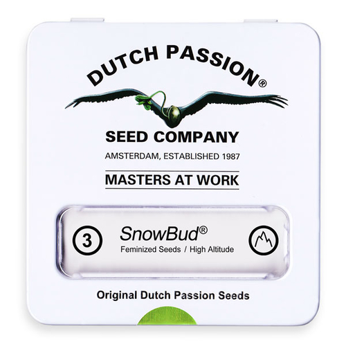 Snow Bud / FEM 3er / Dutch Passion