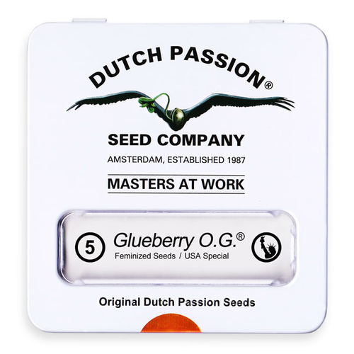 Glueberry O.G. / FEM 5er / Dutch Passion