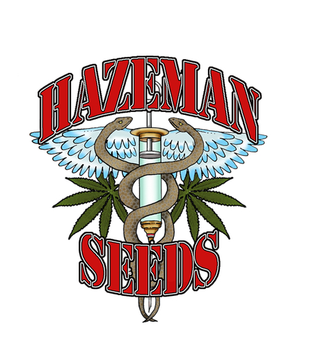 Black Russian / REG 12er / HazeMan Seeds