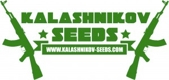White Critical Express / FEM 10er / Kalashnikov Seeds