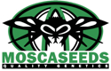 Digital Haze (Limited Edition) / REG 20er / Mosca Seeds