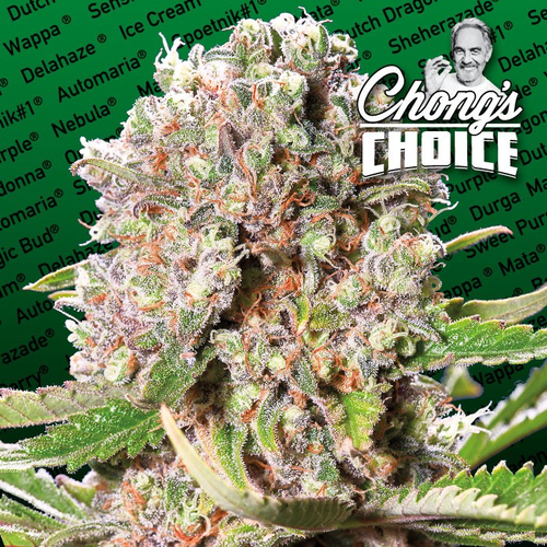 Mendocino Skunk (Chongs Choice) / FEM 10er / Paradise Seeds