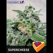 Supercheese / FEM 5er / Positronic Seeds