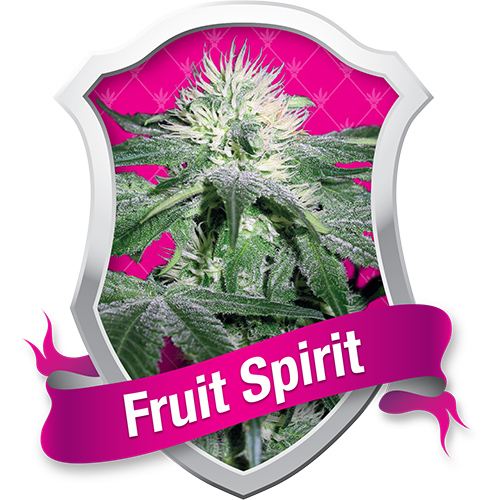 Fruit Spirit / FEM 5er / Royal Queen Seeds