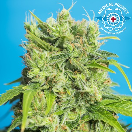 Heavens Gate CBD / FEM 5er / Tropical Seeds