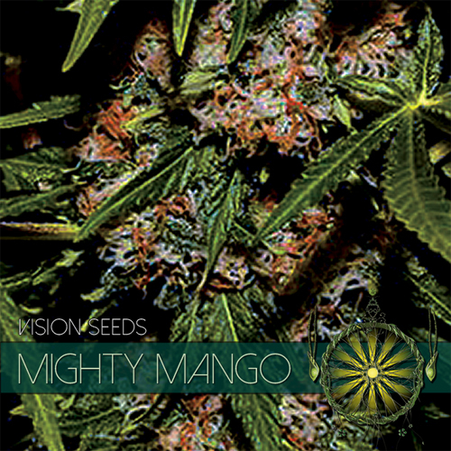 Mighty Mango Bud / FEM 10er / Vision Seeds