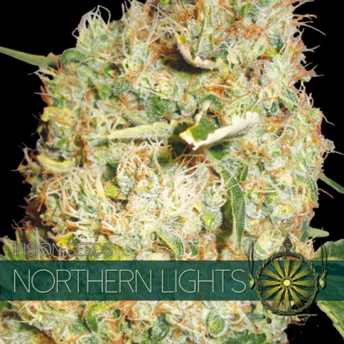 Northern Lights / FEM 5er / Vision Seeds