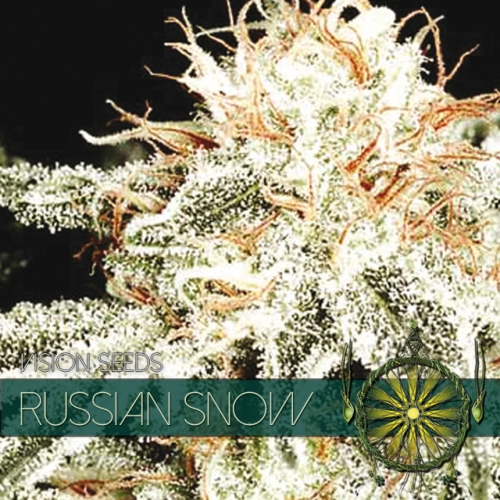 Russian Snow / FEM 10er / Vision Seeds