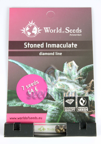 Stoned Immaculate / FEM 12er / World of Seeds