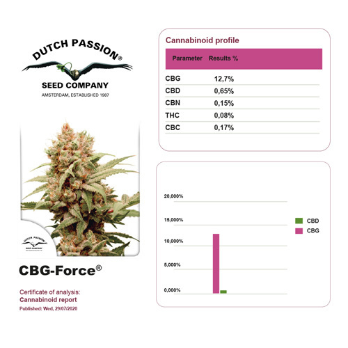 CBG Force / FEM 3er / Dutch Passion